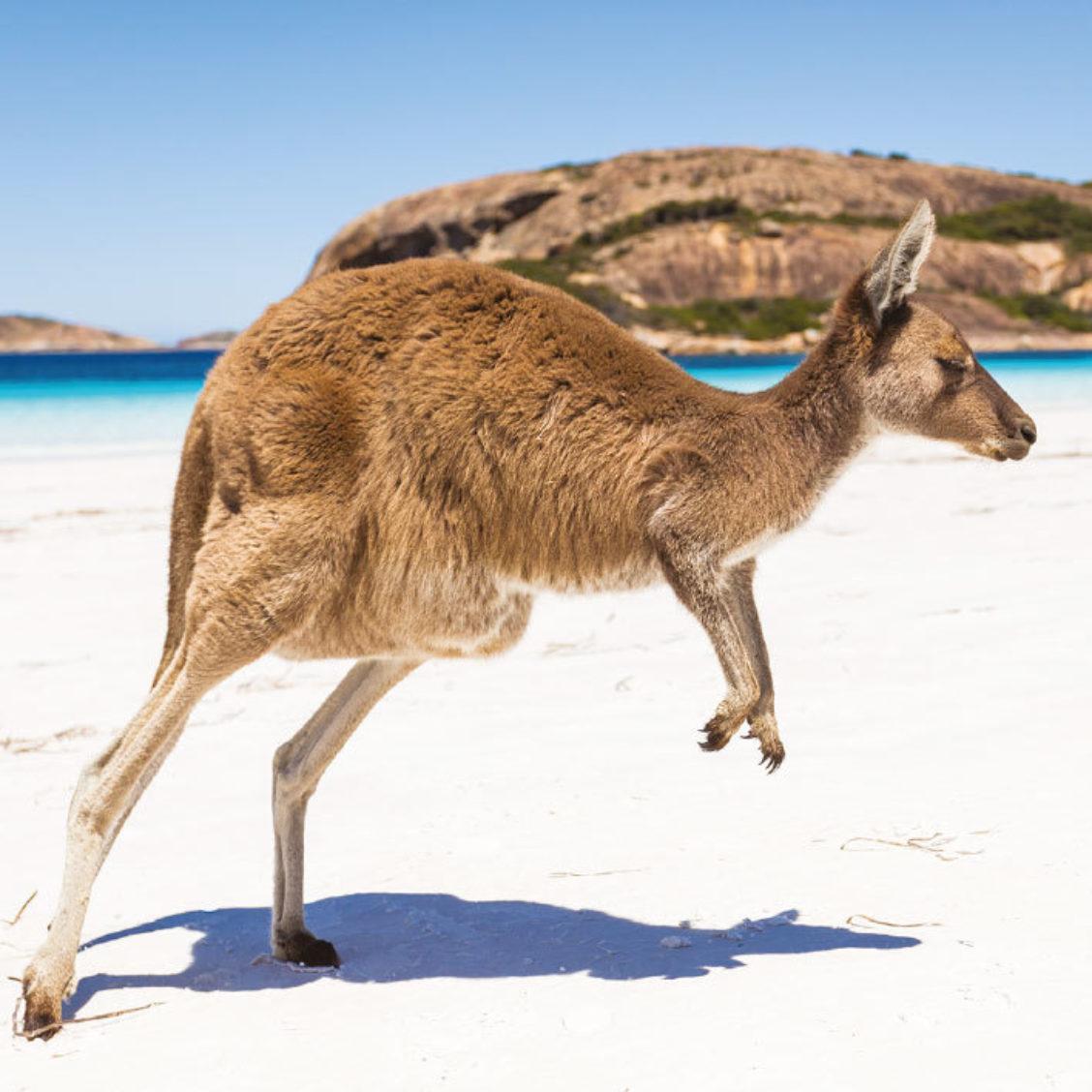 Leap into Australia